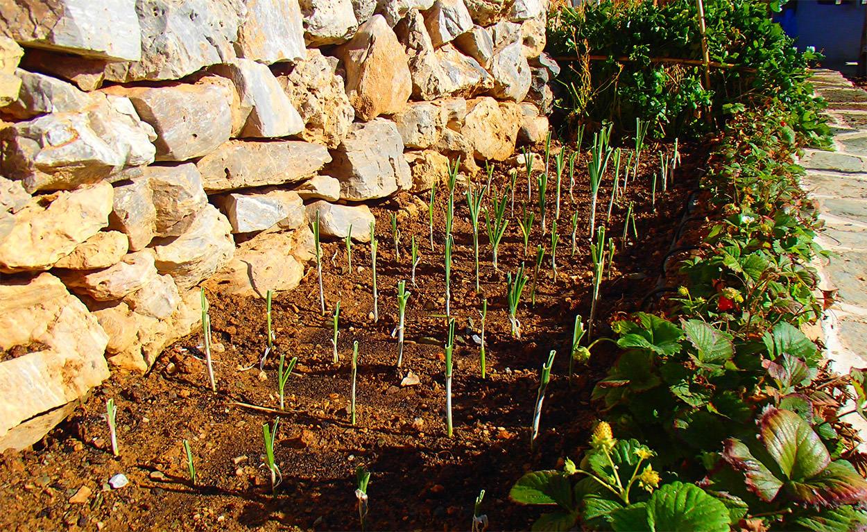 Pavlos x2 Φολέγανδρος - Αγροτουρισμός