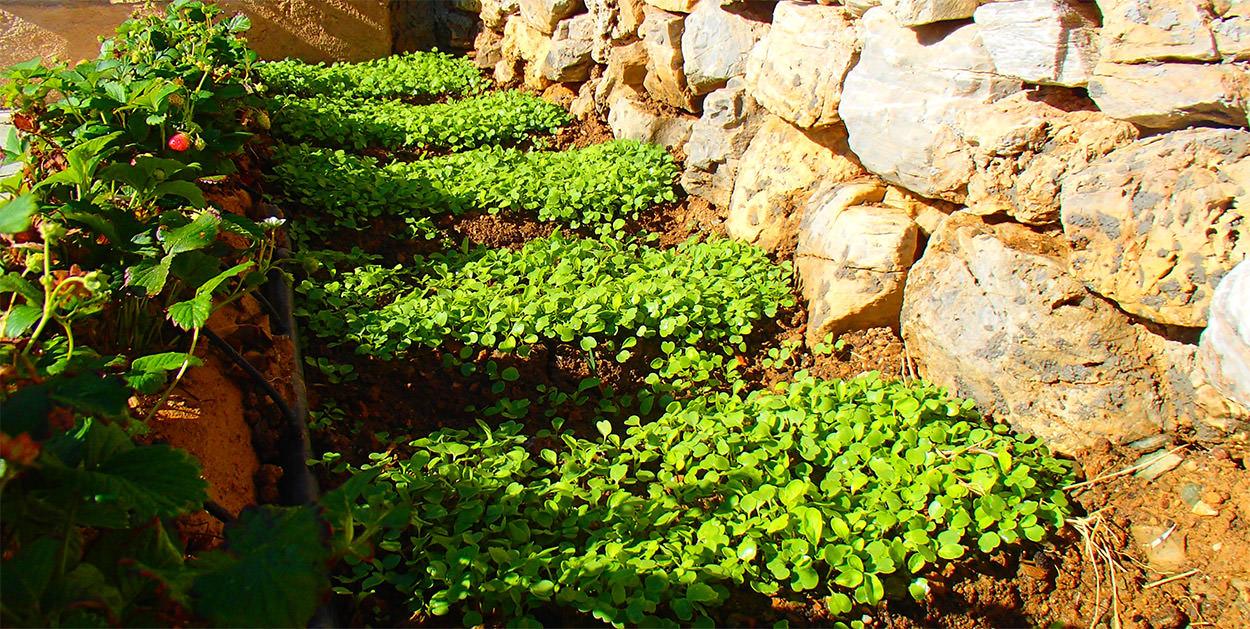 Pavlos x2 Folegandros - Agrotourism